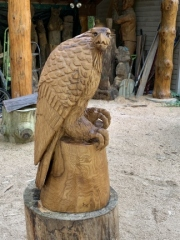 Large Perched Eagle